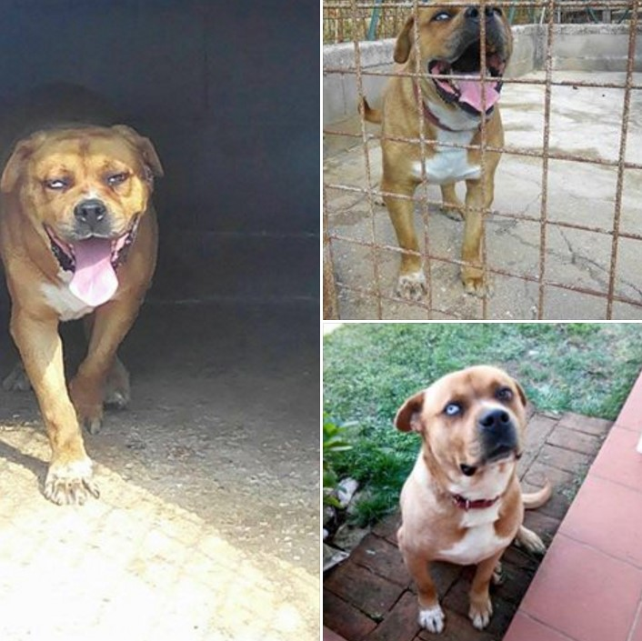 cane-famiglia-sezze-terremoto