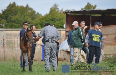 sgombero-terreni-cavalli-disilvio-latina-12