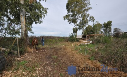 sgombero-terreni-cavalli-disilvio-latina-23