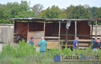 sgombero-terreni-cavalli-disilvio-latina-7