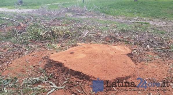 alberi-tagliati-potati-latina-parco-comunale-2016-2