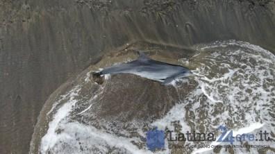 delfino-morto-latina-6