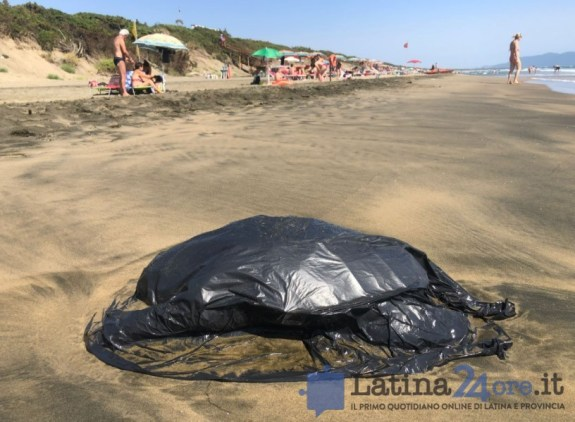 tartaruga-morta-sabaudia-latina24ore