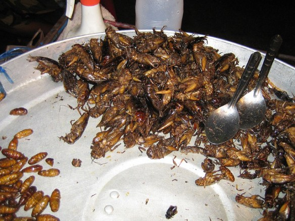 strange food, fried beetles