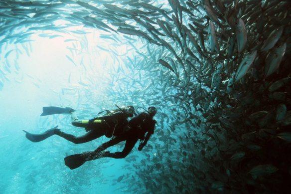 Borneo Sabah diving, barracuda shoal