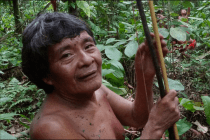 COVID-19, Isolated Indigenous Peoples and the History of the Amazon