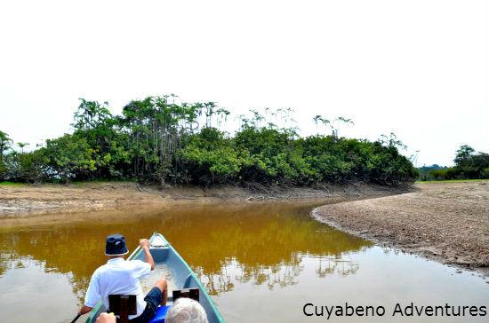 jungle ecuador