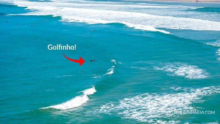 golfinho guarda do Embaú