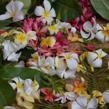 tiarè e altri fiori Tahiti
