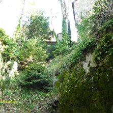 bosco a La Verna
