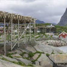 stoccafissi alle Lofoten