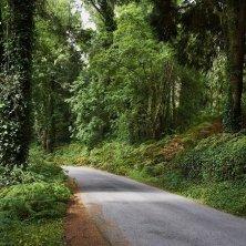 bosco Sintra