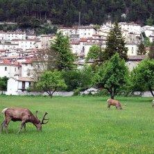 animali vicino ai borghi