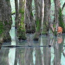 cervo al lago Parco d'Abruzzo