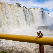 farfalla a Iguazu