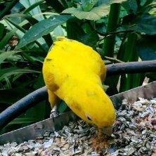 pappagallo a Iguazu