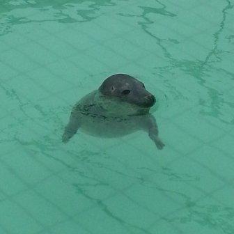 si nuota