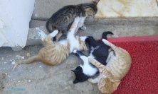gattini giocherelloni