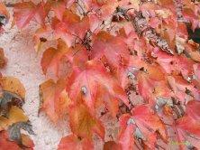 foglie d'autunno a Calcata