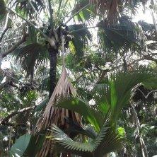 labirinto di palme