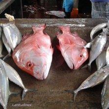pesce al mercato di Victoria