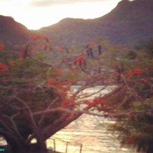 tramonto a Cerf con alberifiamma