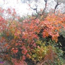 autunno al giardino Portoghesi