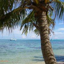 Moorea spiaggia e palma