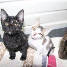gattini al rifugio