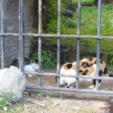 i gatti dell'Esquilino