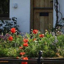 fiori a Tewkesbury