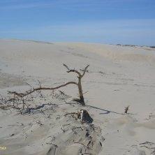 sulle dune