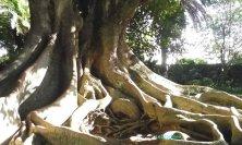 albero di Jos