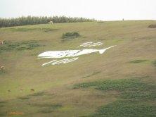 balena disegnata sul monte