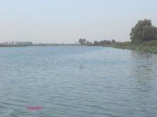 cormorano in acqua