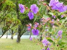 fiori lungo il lago