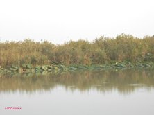 rive in autunno