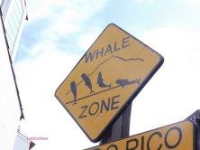 zona balene