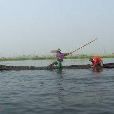 raccolta alghe