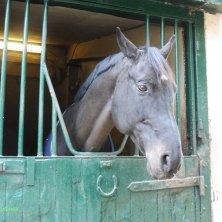 cavallo della tenuta