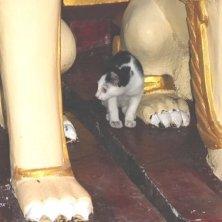gattino tra le statue