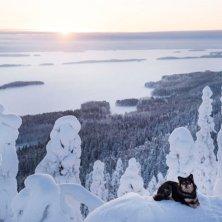 Finland_Koli_dog_JussiHelttunen