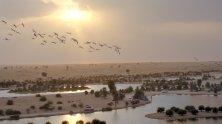 Al Marmoum (2)
