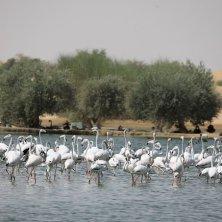 Al Marmoum (6)