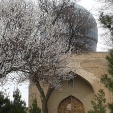 moschea Samarcanda in primavera
