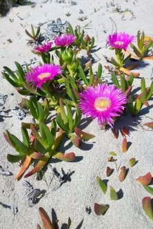 fiori sulla sabbia