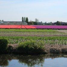 campi di tulipani e canali fuori Amsterdam