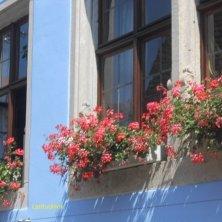 finestre fiorite Rothenburg