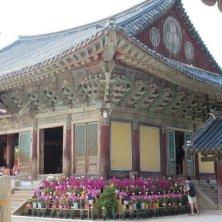 fiori intorno al tempio Bulguksa