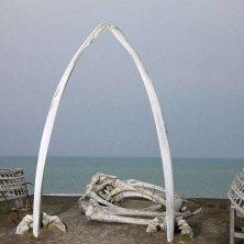 ossa di balena foto Michael DeYoung